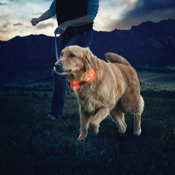 Nite Ize LED Hundehalsband - Rucksack-Zubehör